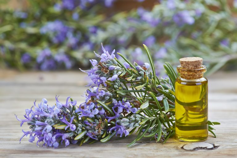 Rosemary Oil for Hair Growth: Does it Work?