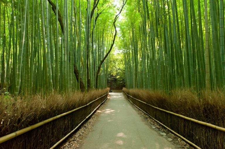 Bamboo Extract for Hair Growth: Worth It?