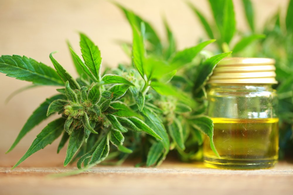 CBD Oil For Hair Growth: Can it Help?
